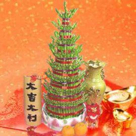 發財 Lucky Bamboo with Gold Ingot