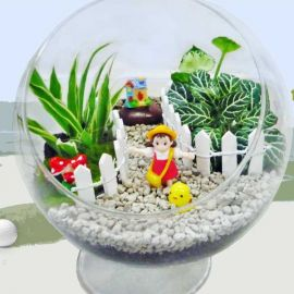 3 Mini Live Plants Terrarium in Glass Vase 15cm Height