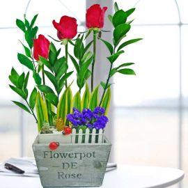 3 Mini Cactus in Pot & 3 Red Roses Arrangement
